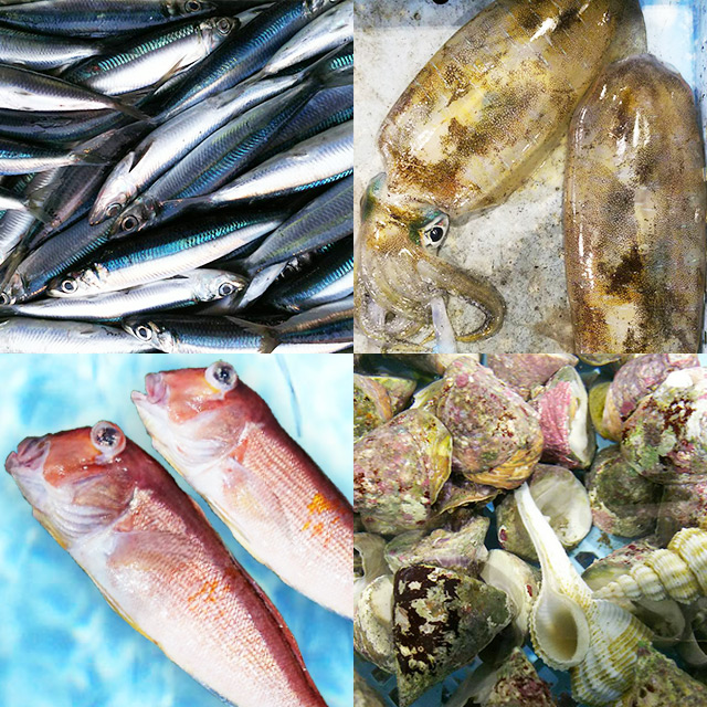 Fish from Amakusa